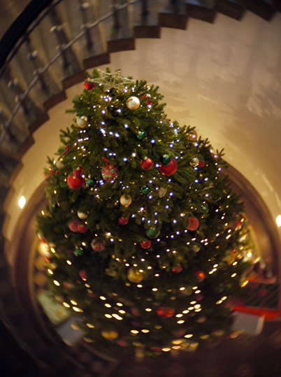 mcmanus gallery christmas tree