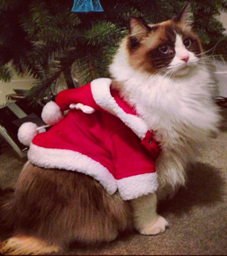 cat christmas costume
