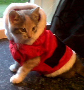 pixie cat christmas costume